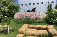 Crama Asconi - vinul îşi dezvăluie secretele